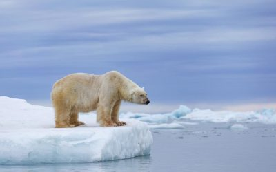 Earth may temporarily pass dangerous 1.5℃ warming limit by 2024